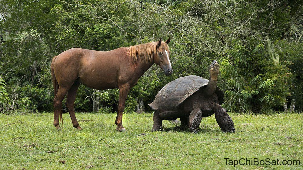"""Image result for galapagos tortoise"""""""