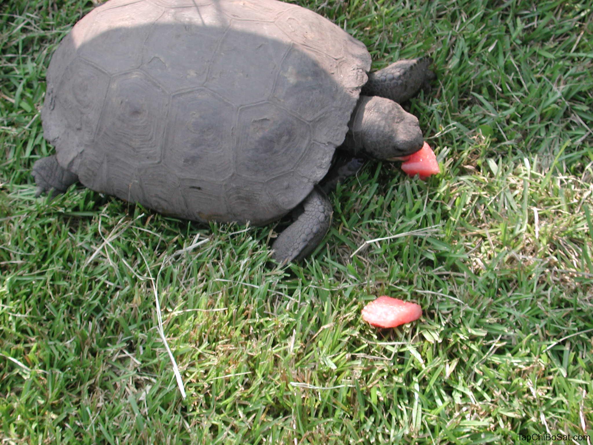 """Image result for gopher tortoise feeding"""""""