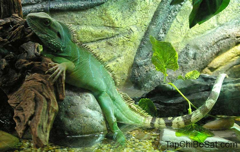 """Image result for Chinese water dragon"""""""