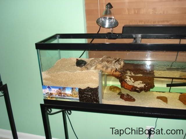 hồ nuôi rùa Đốm (rùa spotted)