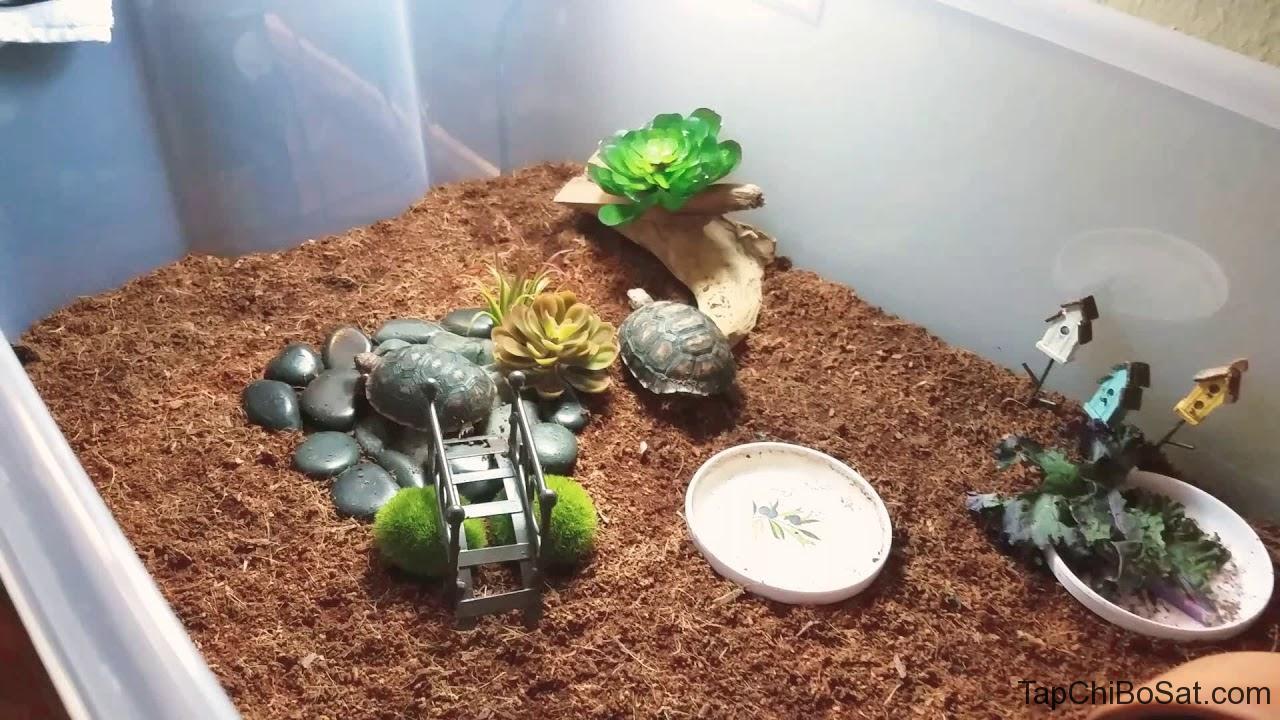 Chuồng nuôi Rùa chân vàng- Yellow footed tortoise