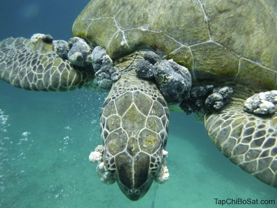 rùa nhiễm trùng mắt 4
