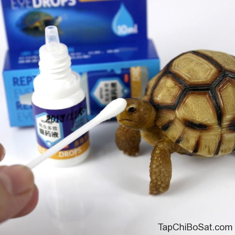 rùa nhiễm trùng mắt 5