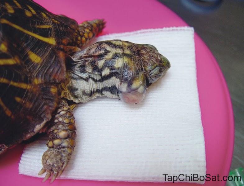 rùa của bạn bị thiếu Vitamin A