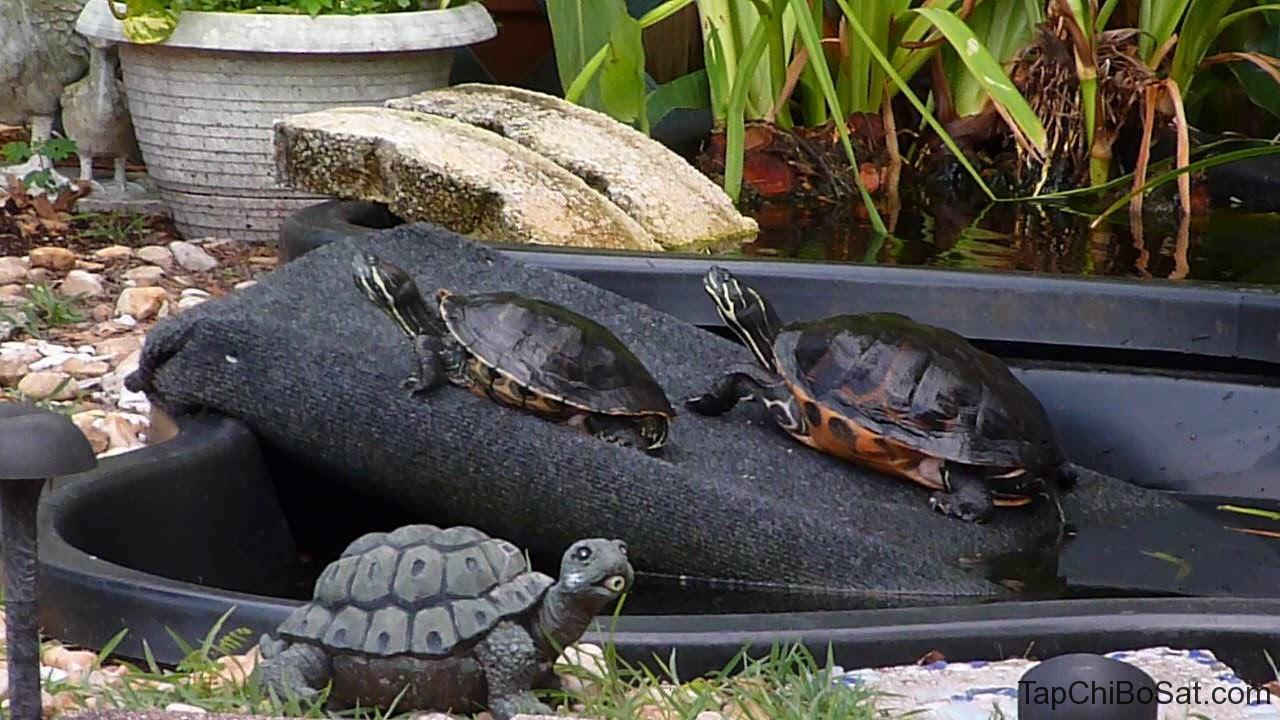 Chuồng nuôi rùa hoa Florida