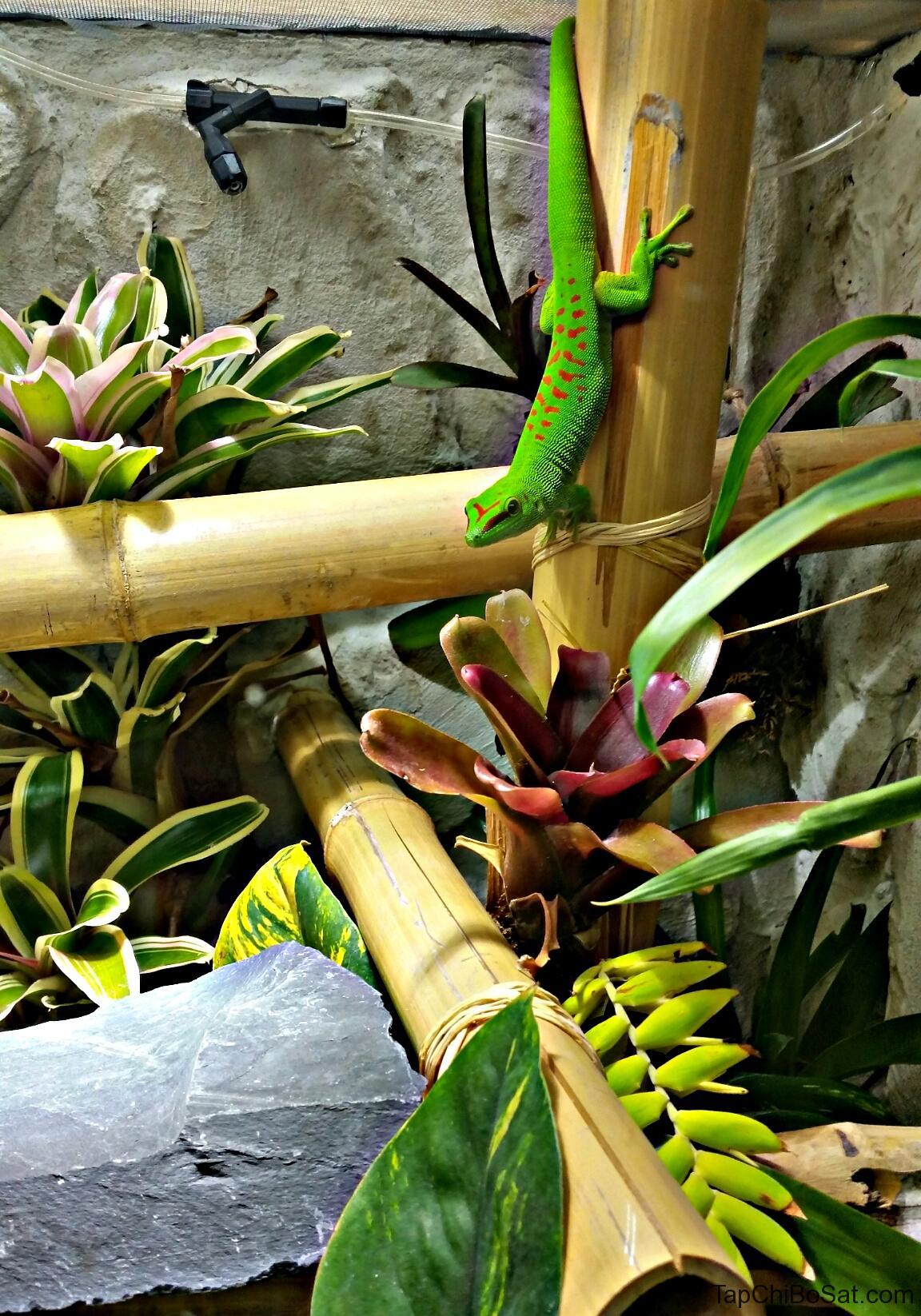 Image result for phelsuma grandis terrarium