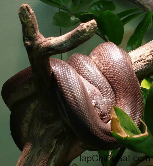 """Image result for savu python"""""""