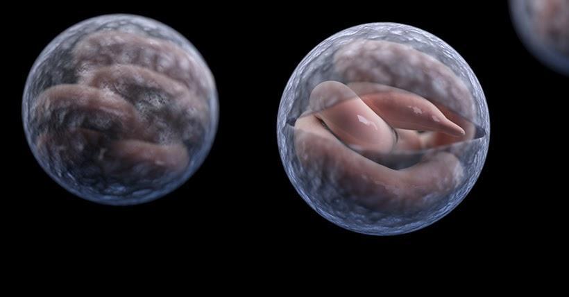Ký sinh trùng Cryptosporidium gây giảm cân và tiêu chảy nghiêm trọng cho rắn