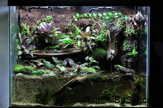 Image result for caiman lizard cage