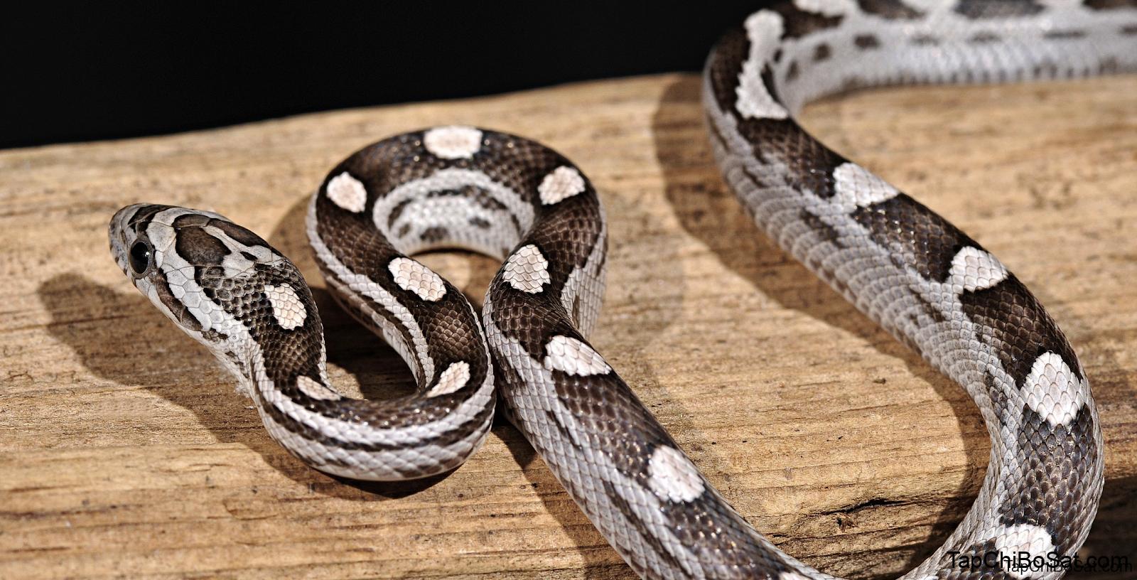 Vitamin bổ sung tốt nhất cho rắn