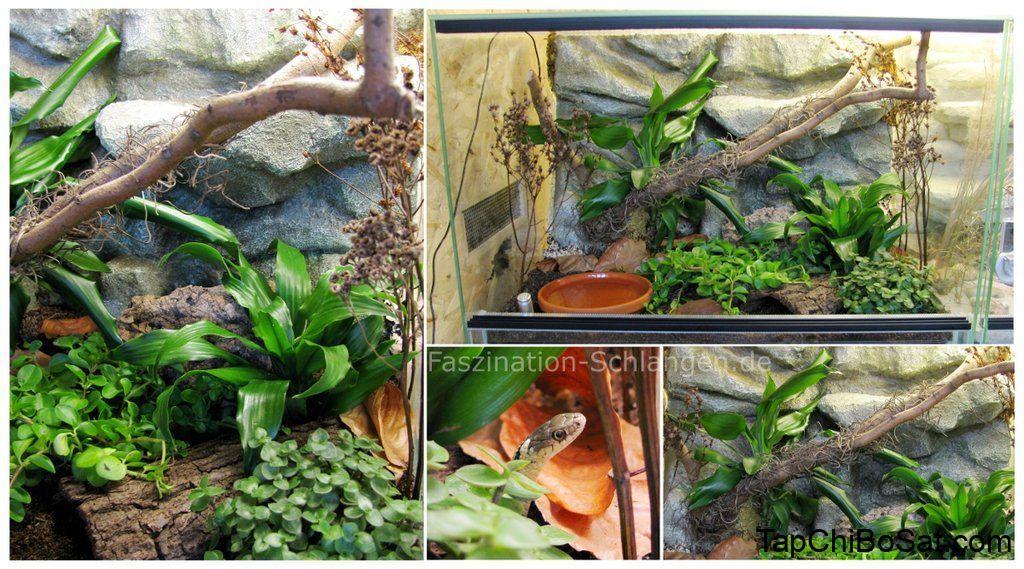 Chuồng nuôi rắn eastern garter- eastern garter snake cage
