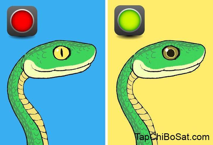 Mắt rắn