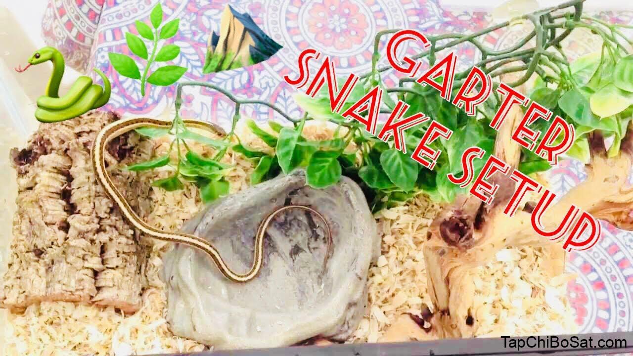 Image result for eastern garter snake cage