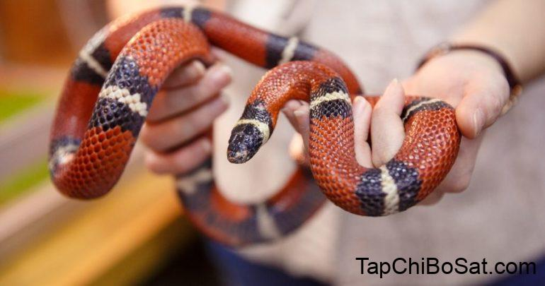 55 Best Names for Pet Snakes to Celebrate Your Cold-Blooded Pal