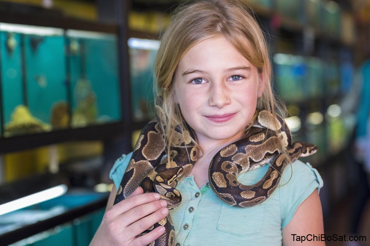 Why snakes make the best pets, instead of cats or dogs | Metro News