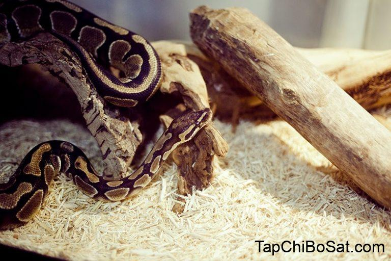 Best Bedding for Ball Python & Snakes Reviews 2019: Easy choice ...