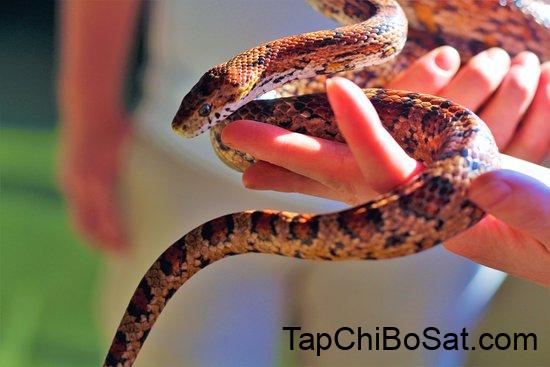 bắt đầu nuôi rắn cảnh