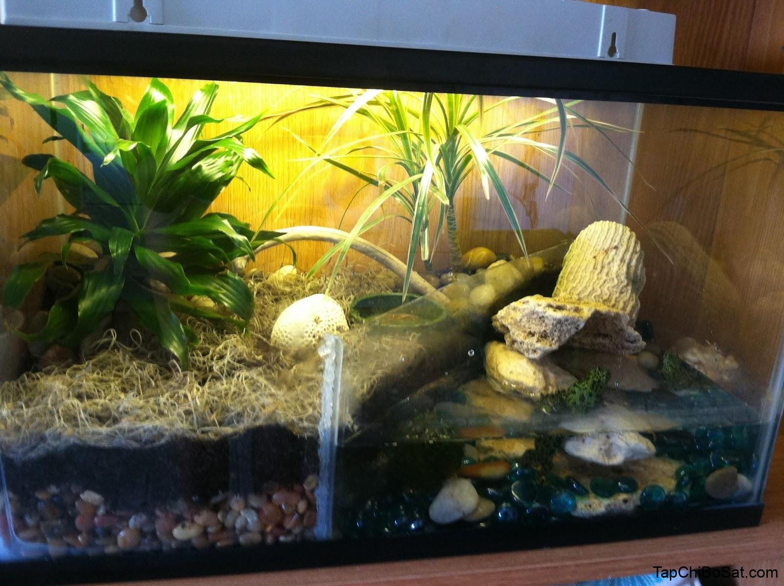 chuồng nuôi ếch cảnh