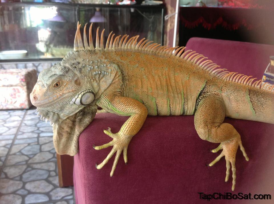 Photo of Cách nuôi Rồng Nam Mỹ chi tiết nhất