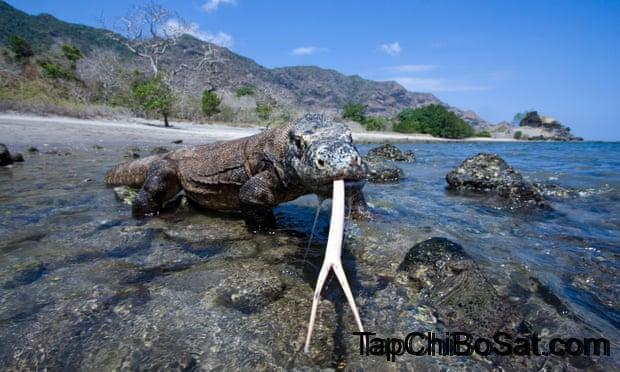 Photo of Indonesia hủy lệnh đóng cửa đảo Komodo
