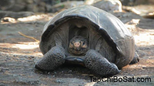 Photo of Rùa Galápagos