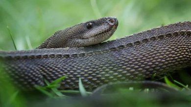 Photo of Rắn rồng – Dragon snake