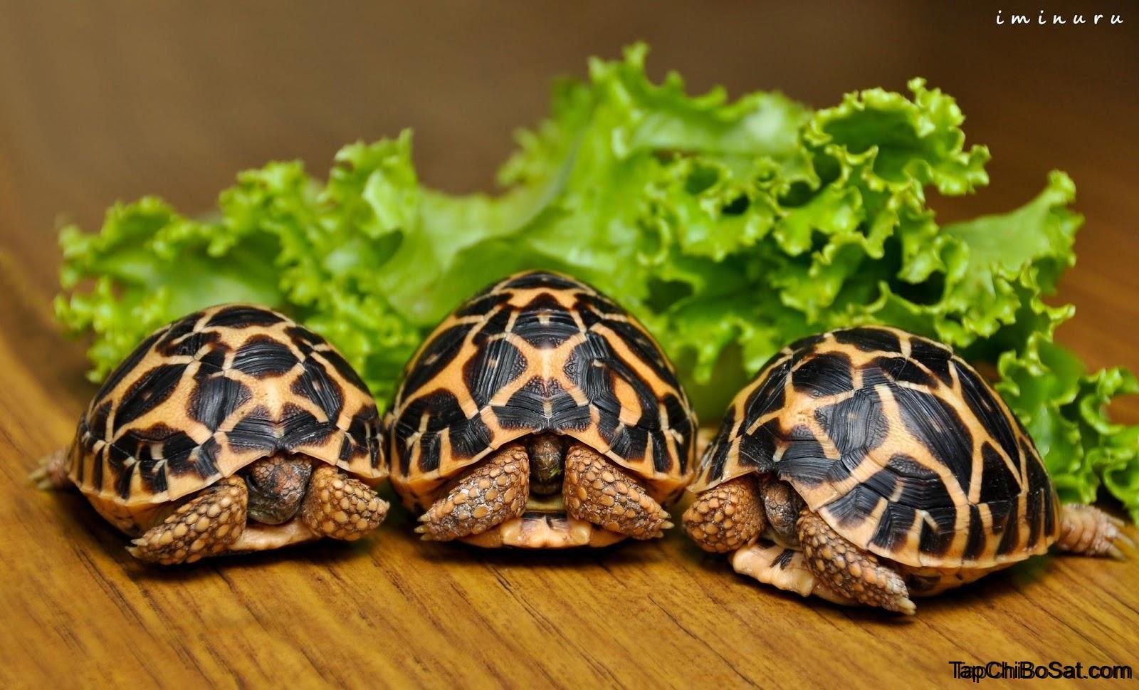 Photo of Chăm sóc và nuôi Rùa Sao Ấn Độ chi tiết nhất