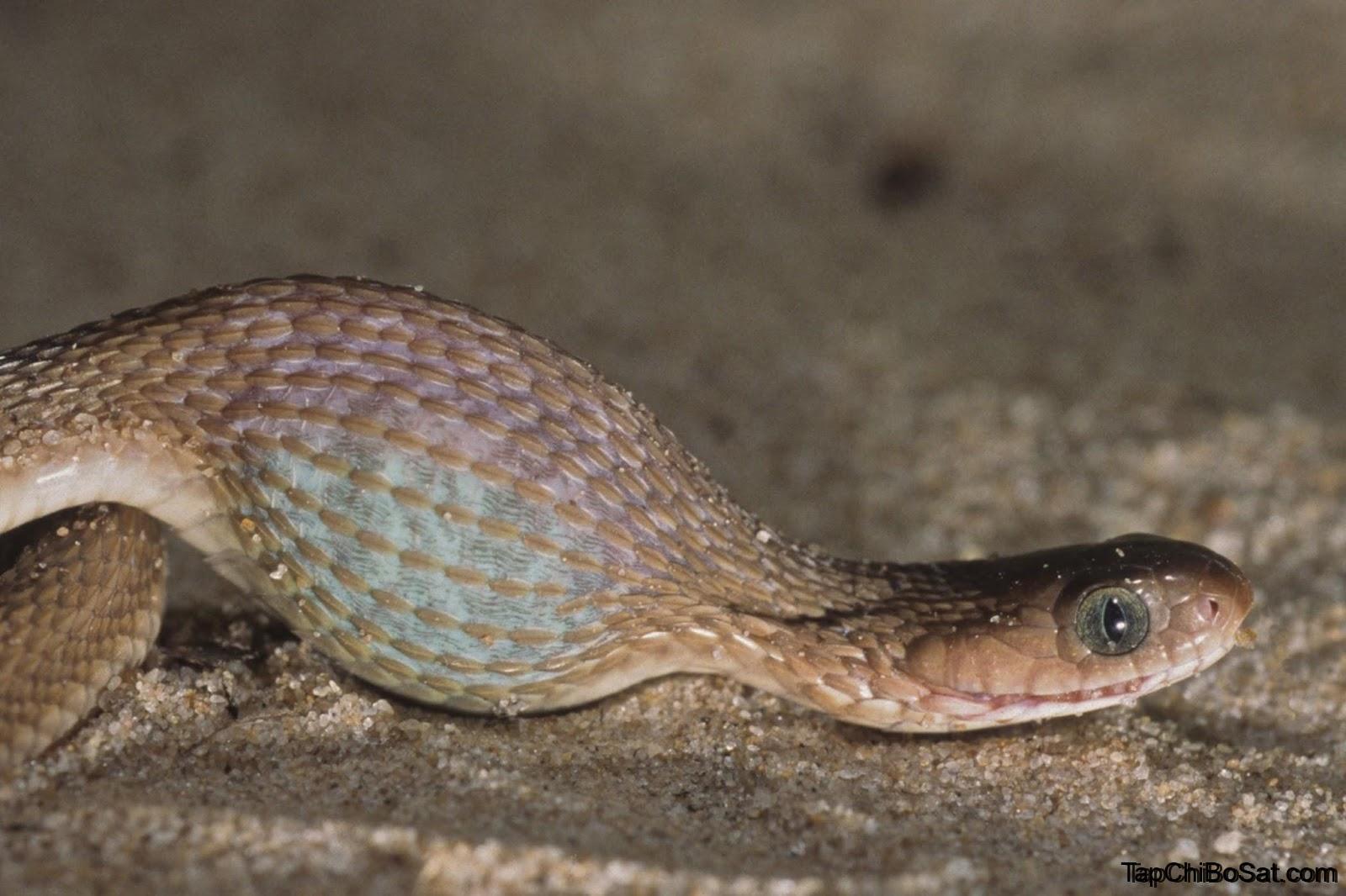 Photo of Bệnh thể vùi ở rắn cảnh