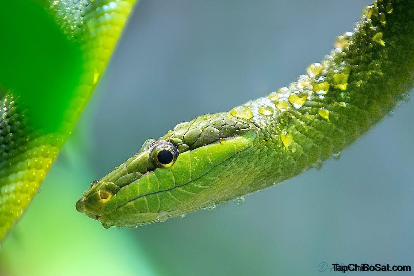 Photo of Mất nước ở rắn nuôi cảnh