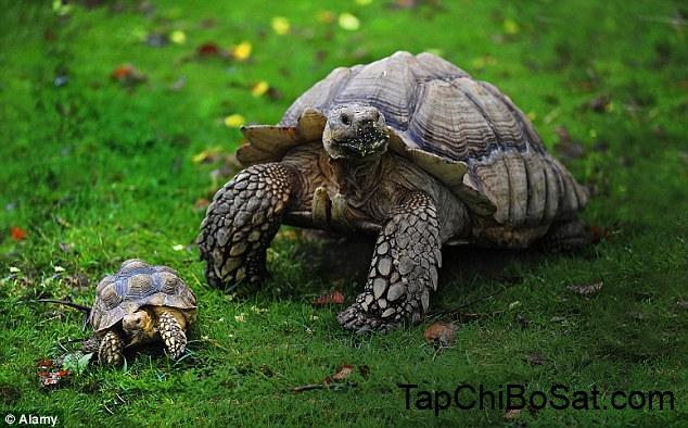 Photo of Những điều cần biết khi bắt đầu nuôi rùa cảnh