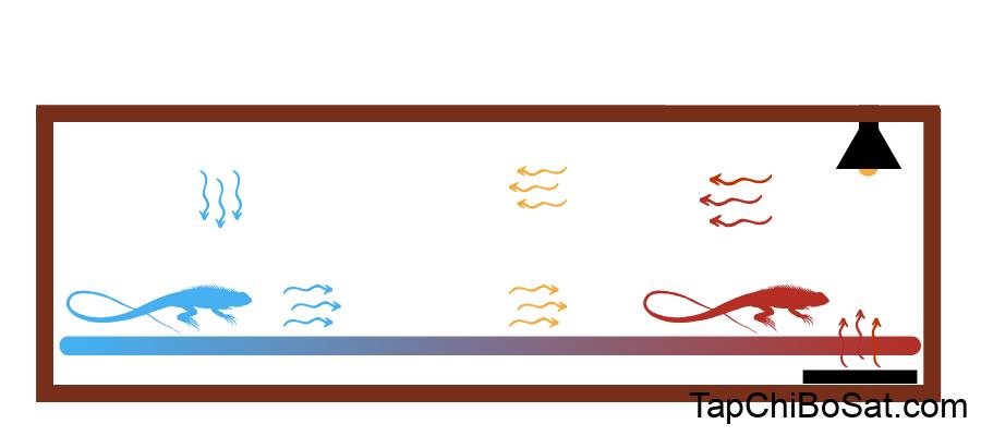 Photo of Tạo dải nhiệt độ chuồng bò sát: cách thiết lập và điều chỉnh