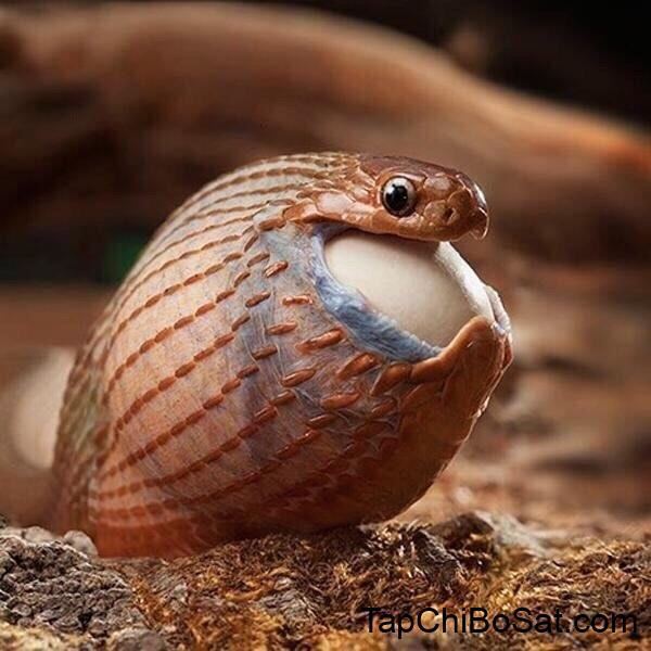 Photo of Chế độ ăn tốt nhất cho rắn cảnh của bạn