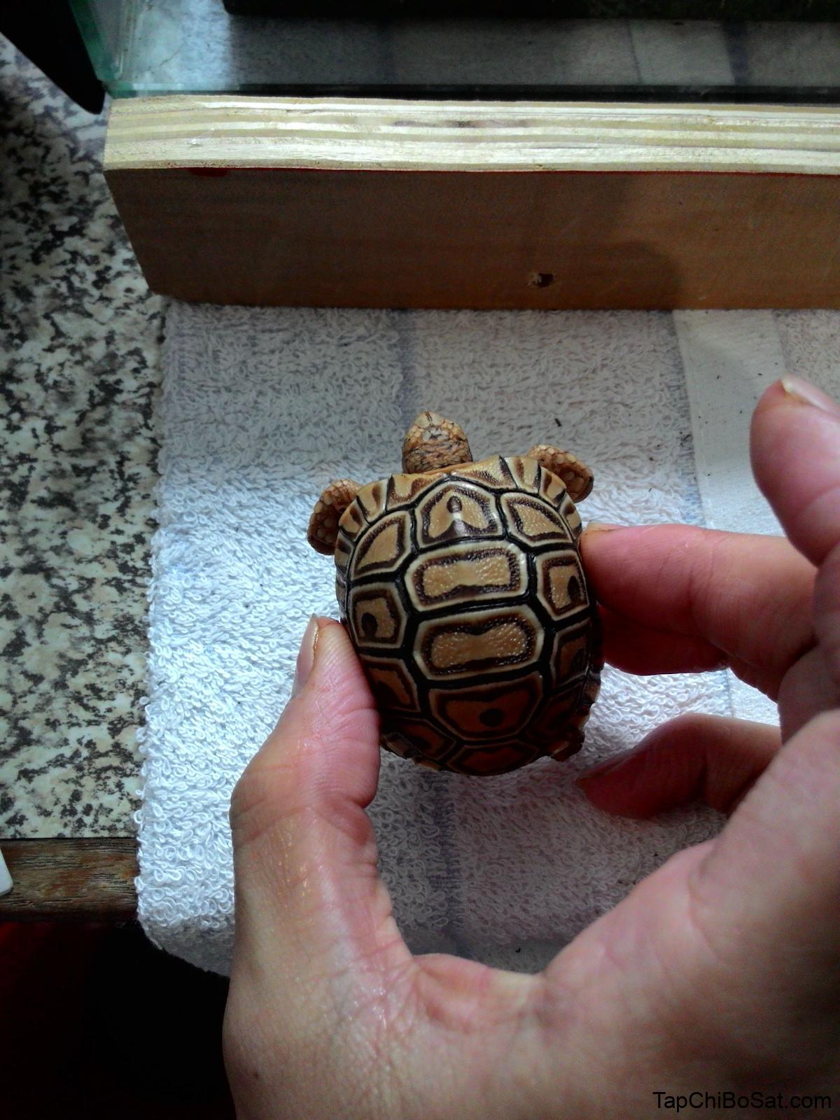 tắm sạch sẽ cho rùa tránh rùa bị tiêu chảy