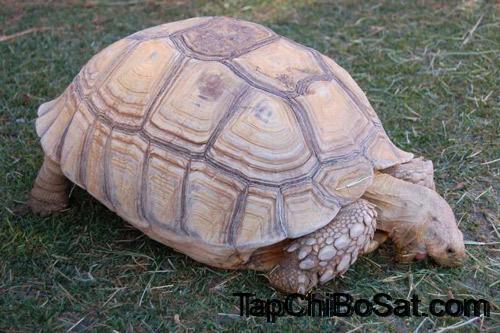 Photo of Cách phân biệt rùa đực-rùa cái