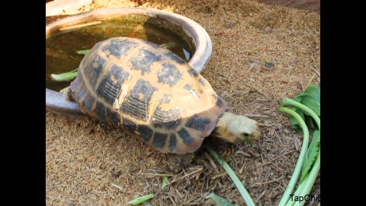 วาสนา กวางตุ้ง (Elongated Tortoise) - YouTube