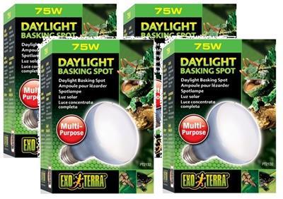 4 Pack) Exo Terra Sun Glo Neodymium R20, 75W 15561221320 | eBay