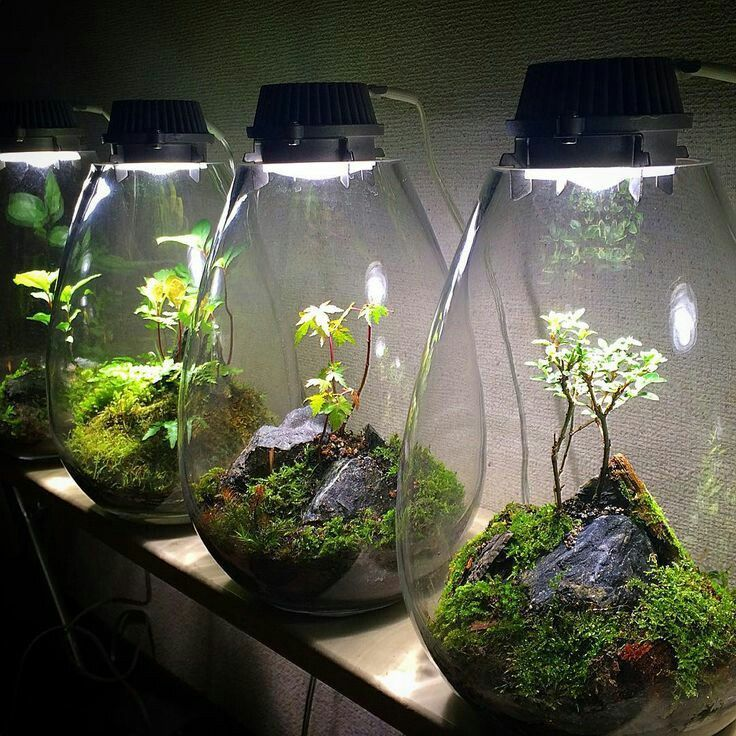 Image result for 5 gallon terrarium   Succulent terrarium, Garden ...