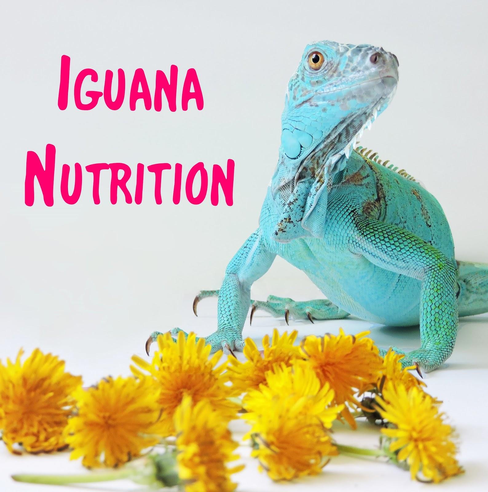 ZA: Iguana Nutrition: Feeding Your Iguana