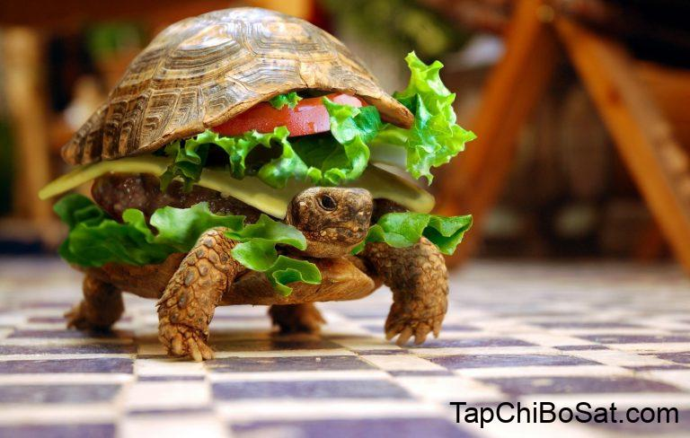 The 10 Best Turtle Food: Reviews & Guide 2019 - My Life Pets