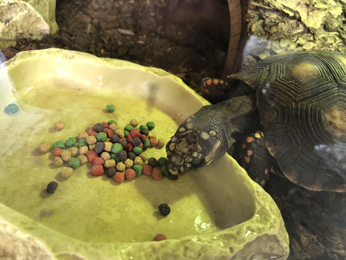 """The Tye-Dyed Iguana on Twitter: """"Look how popular our RepCal ..."""