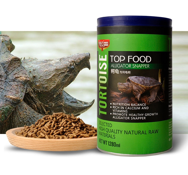 Snapping turtle tortoise Chelydra alligator snapper food feed ...