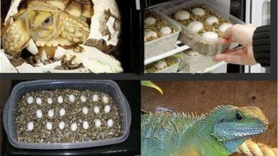 Photo of Top 5 máy ấp trứng tốt nhất cho bò sát