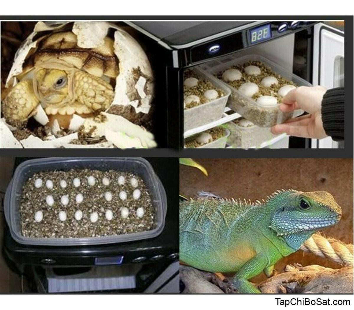 Kết quả hình ảnh cho chameleon incubator