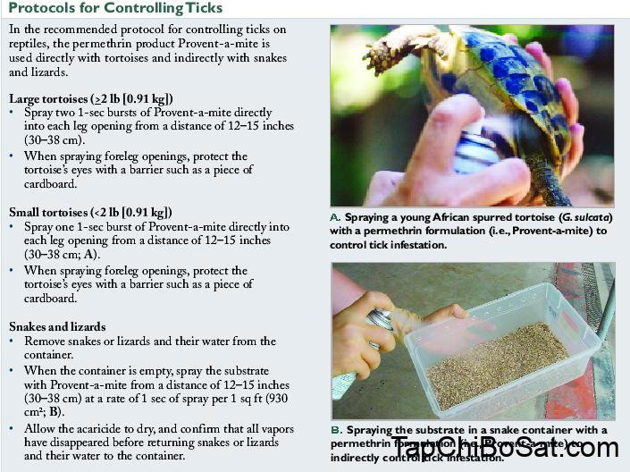 Controlling and Eradicating Tick Infestations on Reptiles - VetFolio