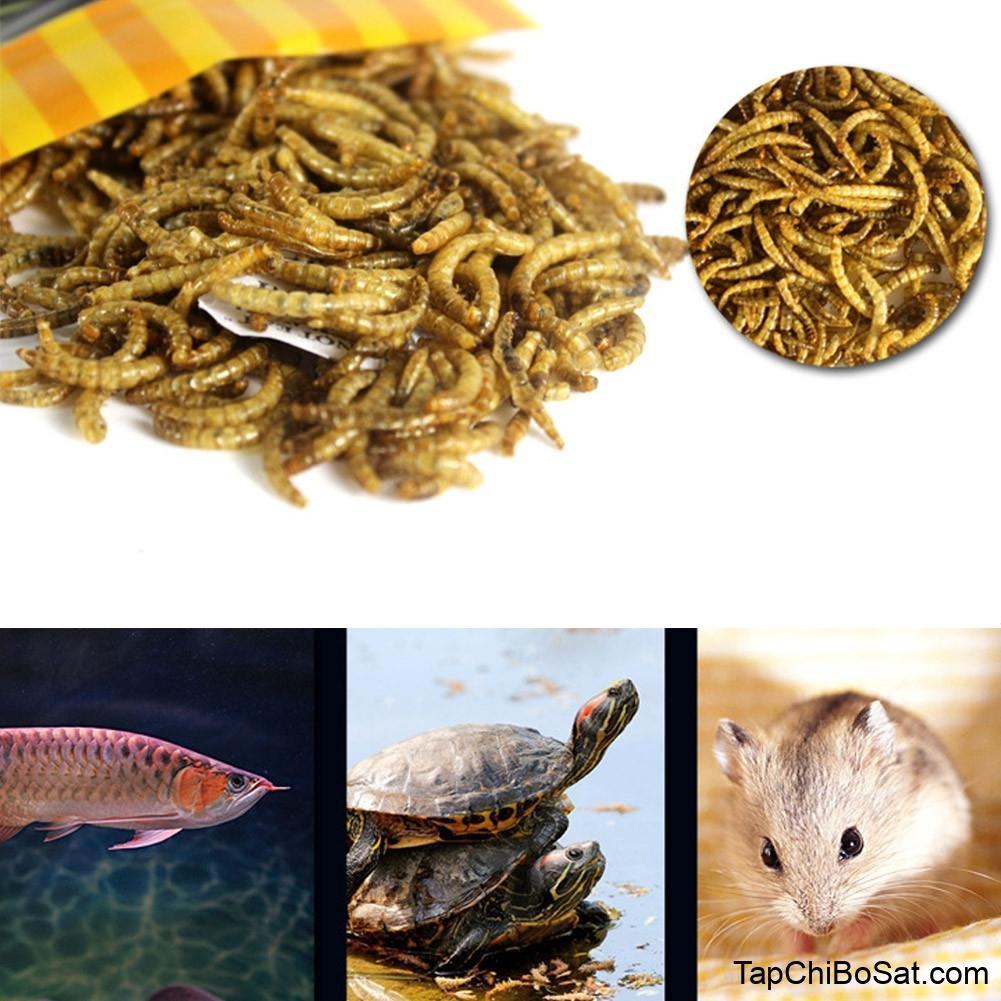 2020 Turtle Fish Feeder Food Feed Sticks Granules Dried Fish ...