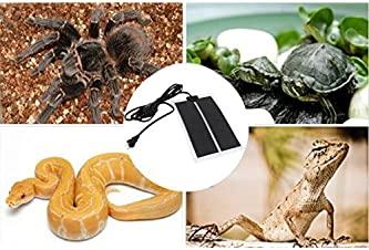 Explore heat rocks for reptiles   Amazon.com