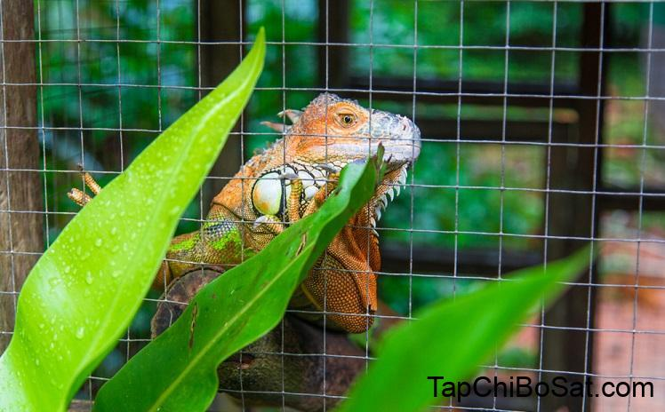 Top 4 Best Iguana Cage Reviews 2020