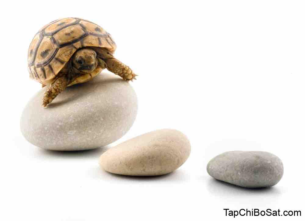 Do Pet Tortoises Need Toys? | Tortoise Owner