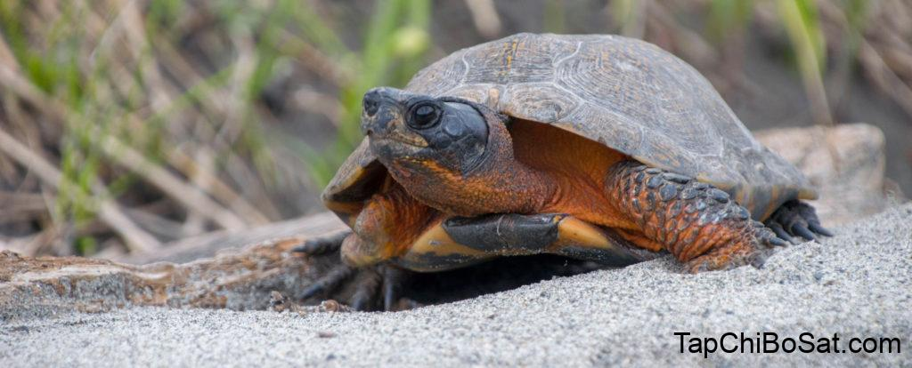 Tripod Turtles -