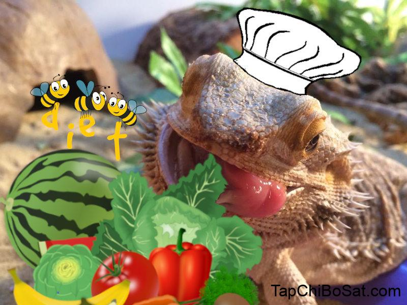 Bearded Dragon Diet and Nutrition [Over 125 Safe Food List]